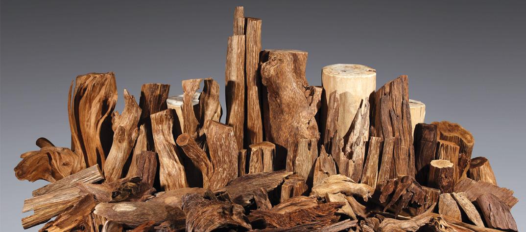 agarwood-1